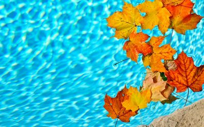 3 Easy Ways to Keep Leaves Out of Your Pool