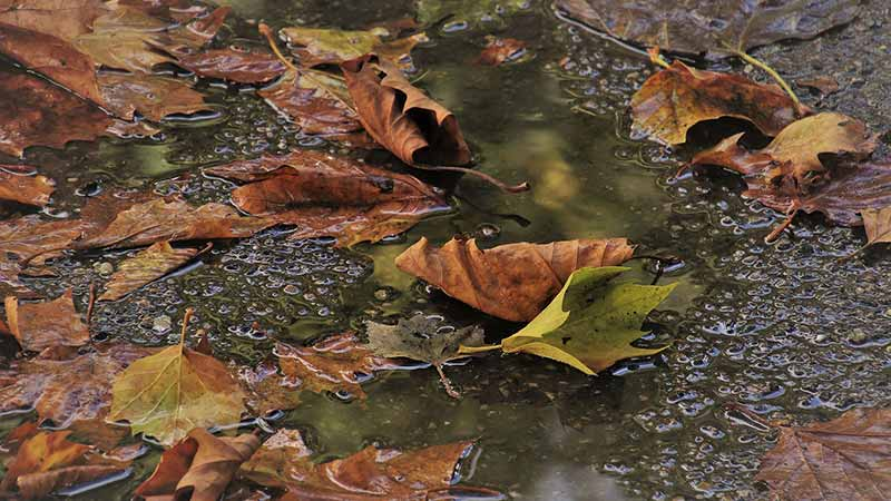 Leaf Relief – How to Prevent Stains in Your Pool
